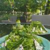 Зеленый салат Дача